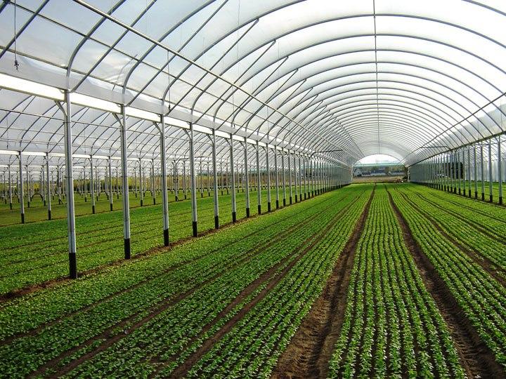 Serre fotovoltaiche tutte le offerte cascare a fagiolo for La serra progetta le planimetrie