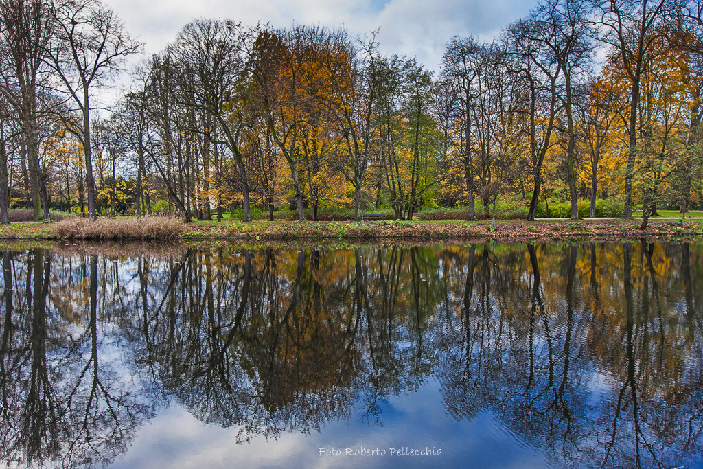 Fb24 Varsavia alberi che si specchiano nel parco Łazienki2