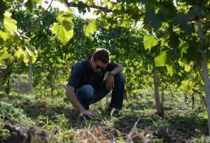 SERGIO PAPPALARDO vitienologo CON(SENSO)wine light